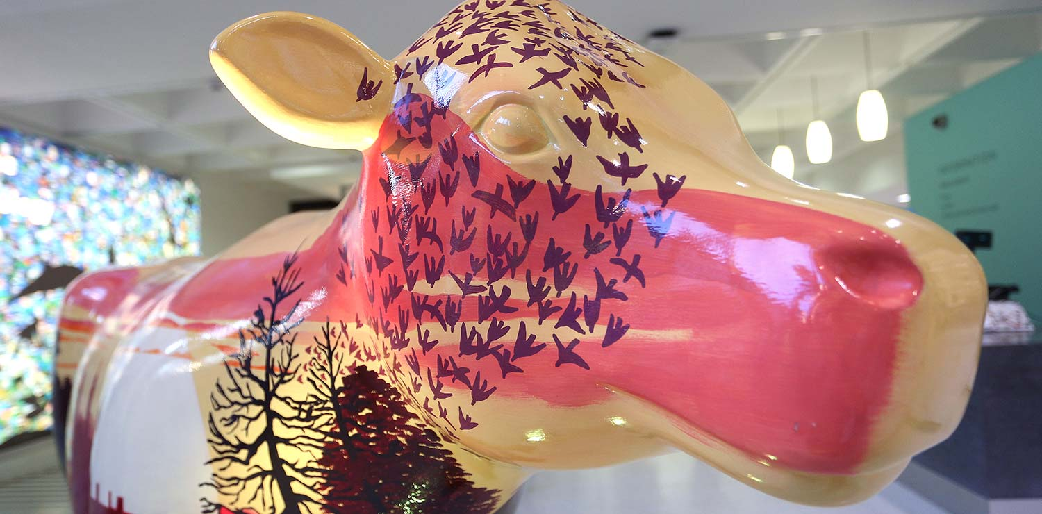cows-about-cambridge-painted